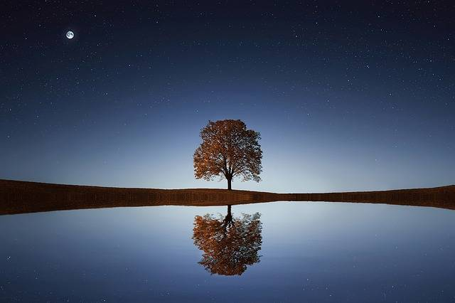 Tree Lake Reflection - Free photo on Pixabay (295030)