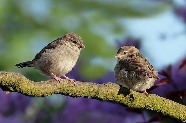 Animal Bird Sparrow - Free photo on Pixabay (301796)