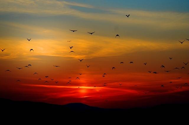 Sunset Birds Flying - Free photo on Pixabay (303056)