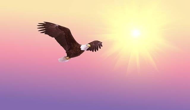 Bald Eagle Soaring Bird - Free image on Pixabay (317324)