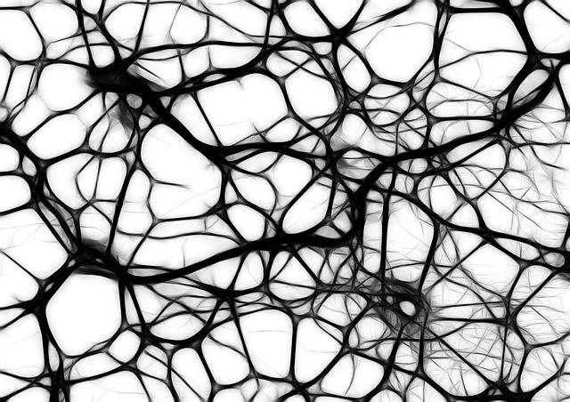 Neurons Brain Cells - Free image on Pixabay (335567)