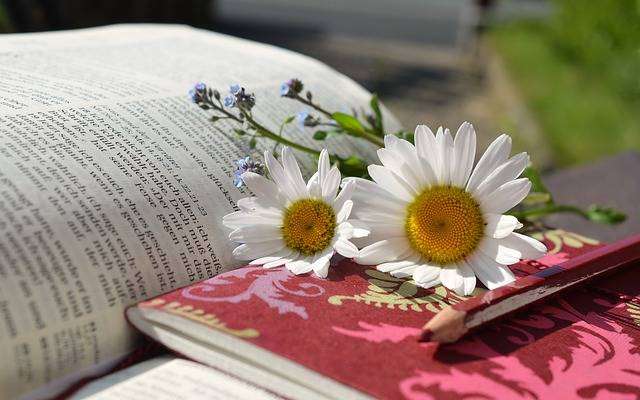 Daisies Book Read Writing - Free photo on Pixabay (340469)