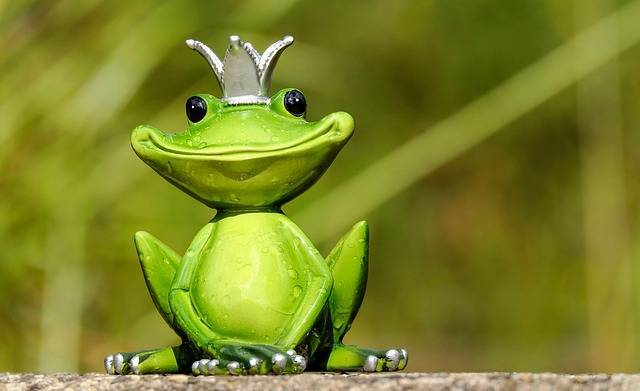 Frog Prince - Free photo on Pixabay (352879)