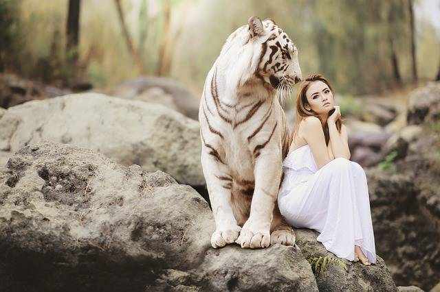 Nature Animal World White Bengal - Free photo on Pixabay (357122)