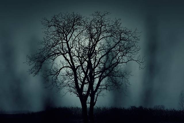 Tree Silhouette Mysterious - Free photo on Pixabay (358118)