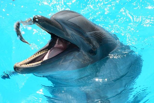 Dolphins Marine Life Fish In Water - Free photo on Pixabay (358159)