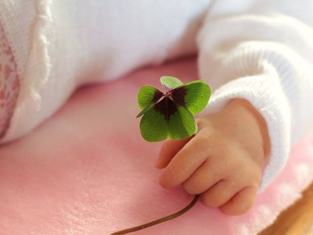 Four Leaf Clover Luck Baby - Free photo on Pixabay (366904)