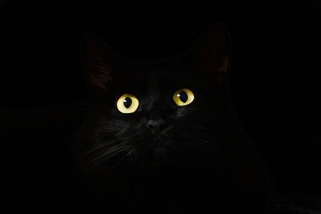 Cat Eyes Black - Free photo on Pixabay (375083)