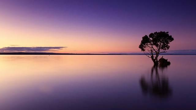 Sunset Tree Water - Free photo on Pixabay (377158)