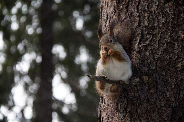 Squirrel Forest Nature - Free photo on Pixabay (385146)