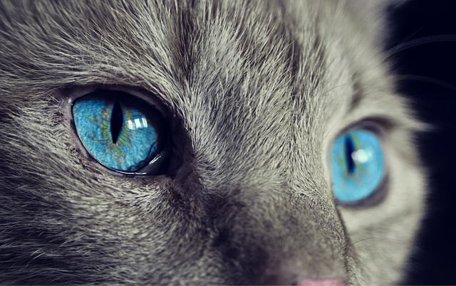 Cat Animal Cat'S Eyes - Free photo on Pixabay (389285)