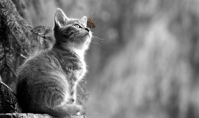 Cat Kitten Butterfly Young - Free photo on Pixabay (394685)