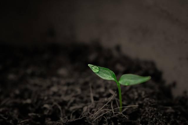 Green Grow Up - Free photo on Pixabay (403733)