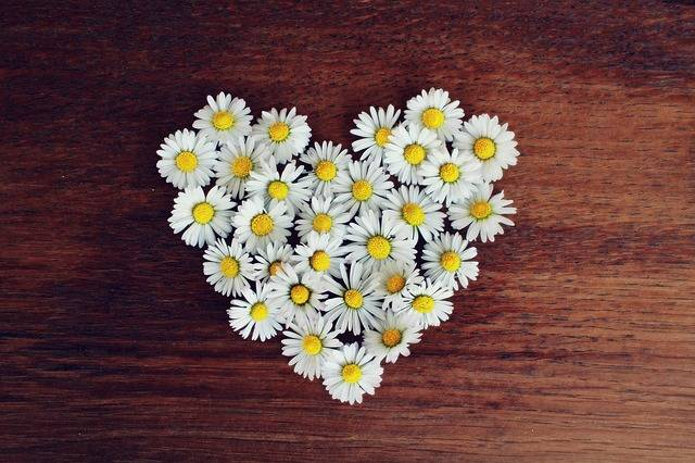 Daisy Heart - Free photo on Pixabay (437350)