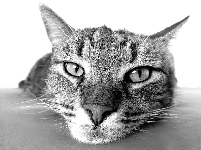 Cat Relax Chill Out - Free photo on Pixabay (440557)
