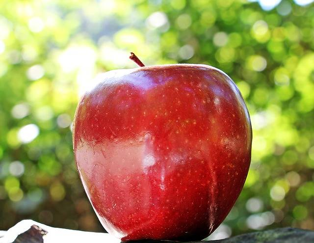 Apple Red Chief - Free photo on Pixabay (448270)