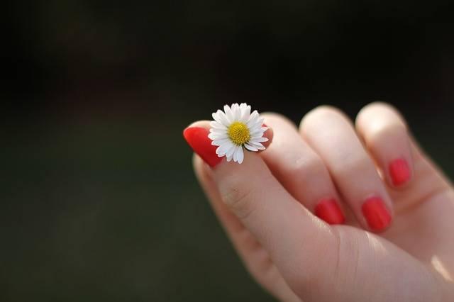 Hand Daisy Flower - Free photo on Pixabay (448657)