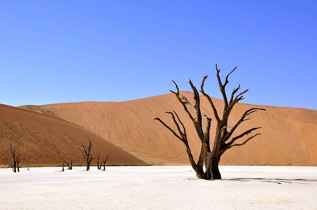Tree Desert Namibia Clay - Free photo on Pixabay (462136)