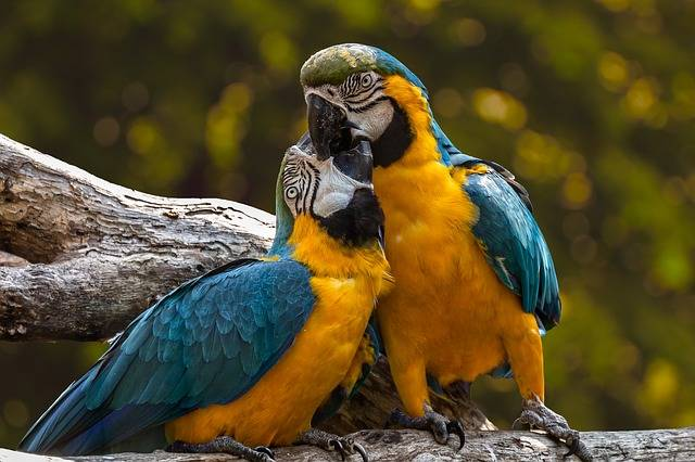 Parrots Exotic Ara - Free photo on Pixabay (478707)