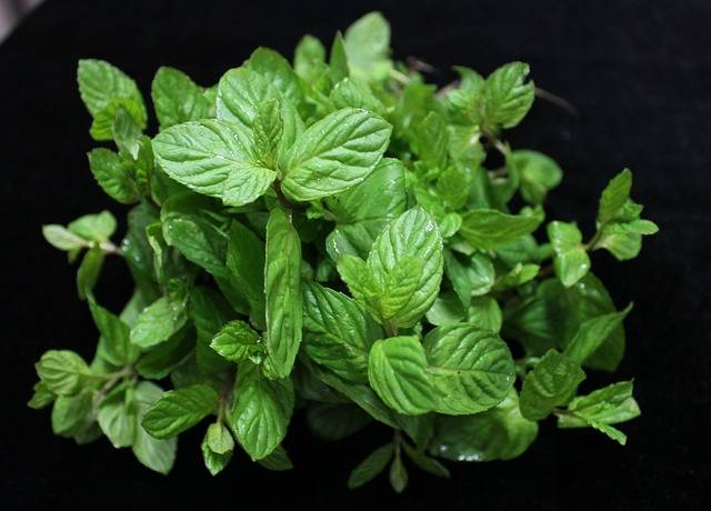 Mint Herbs The Leaves Are - Free photo on Pixabay (509816)