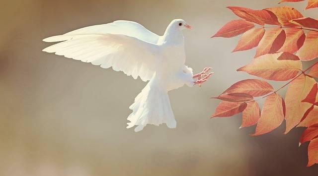 Dove Bird Animal - Free photo on Pixabay (517985)