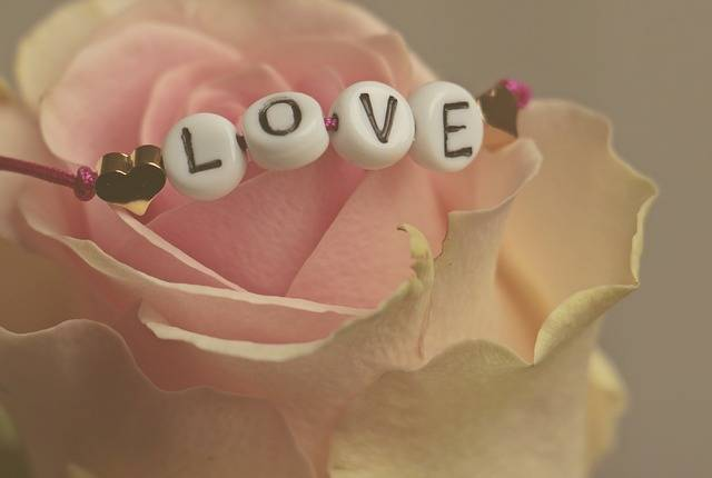 Love Rose Flower - Free photo on Pixabay (519471)