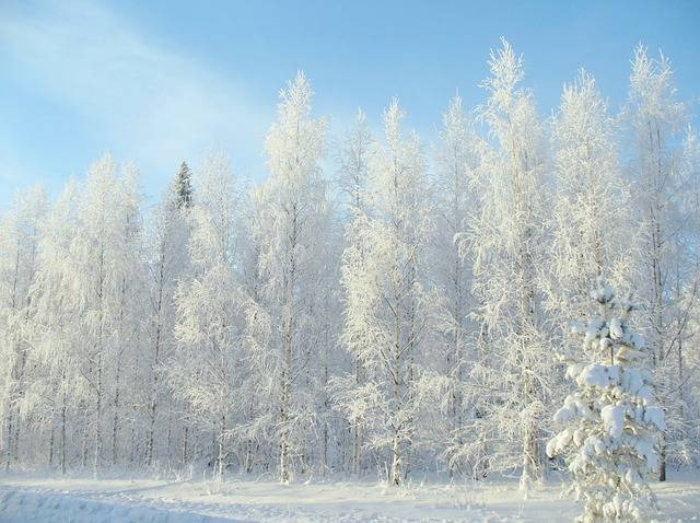 Winter Forest Snow - Free photo on Pixabay (523711)