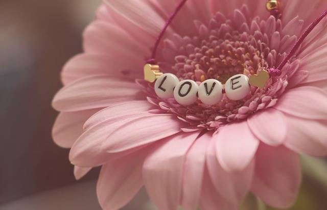 Love Bracelet Gerbera - Free photo on Pixabay (527872)