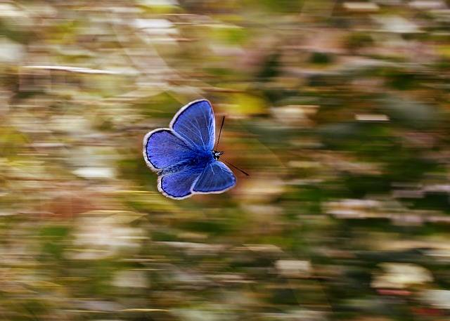 Butterfly Blue Wings - Free photo on Pixabay (541542)