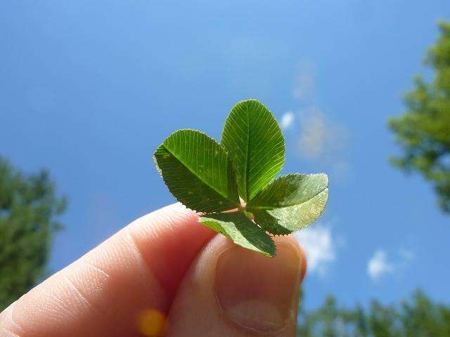 Four Leaf Clover Nature - Free photo on Pixabay (554335)