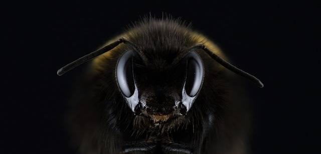 Hummel Bombus Eye - Free photo on Pixabay (558395)