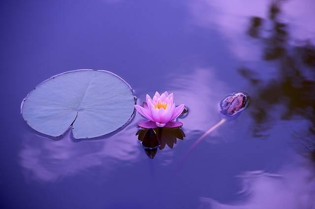 Lotus Natural Water - Free photo on Pixabay (583762)