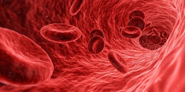Blood Cells Red - Free image on Pixabay (601438)
