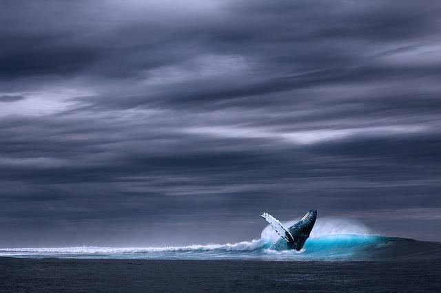 Ocean Blue Whale Sea - Free photo on Pixabay (602203)