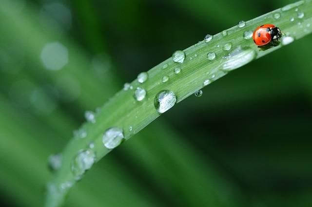 Ladybug Drop Of Water Rain - Free photo on Pixabay (638890)