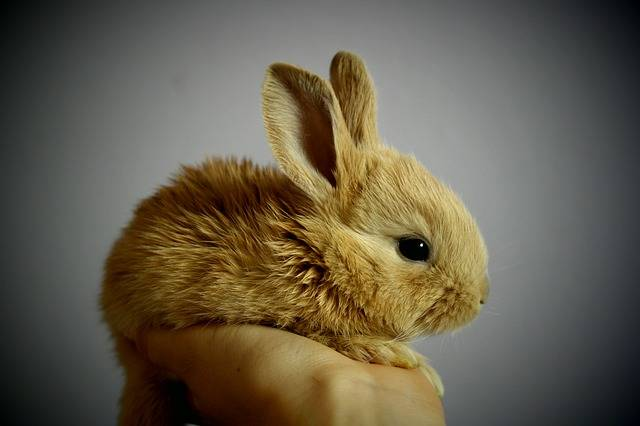 Rabbit Palm Hand - Free photo on Pixabay (655121)