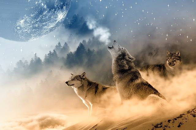 Wolves Wolf Howling - Free photo on Pixabay (662893)