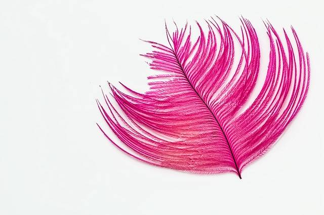 Feather Wallpaper Ostrich - Free photo on Pixabay (717935)