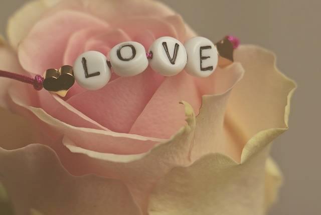 Love Rose Flower - Free photo on Pixabay (722647)