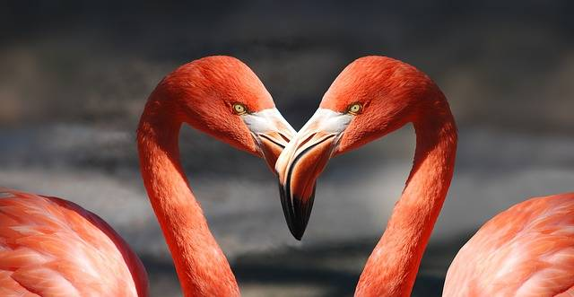 Flamingo Valentine Heart - Free photo on Pixabay (731681)