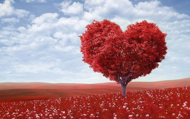 Heart-Shape Tree Red - Free photo on Pixabay (732155)